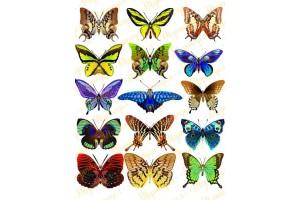 Вафельная картинка Бабочки №1