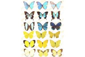 Вафельная картинка Бабочки №11