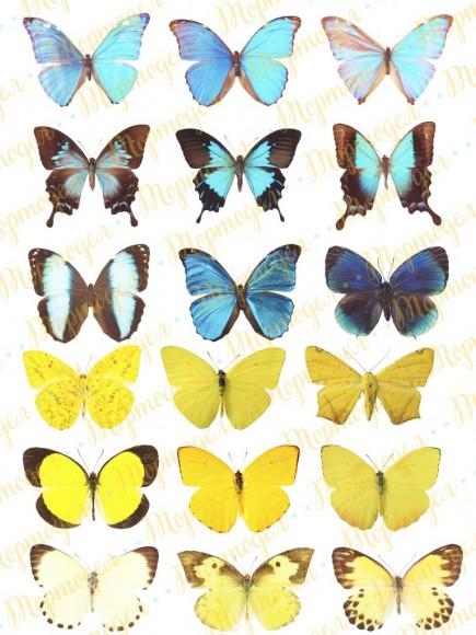 Вафельная картинка Бабочки №11. Купить вафельную или сахарную картинку Киев и Украина. Цена в интернет магазине Тортодел.
