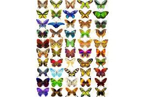 Вафельная картинка Бабочки №4