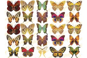 Вафельная картинка Бабочки №5